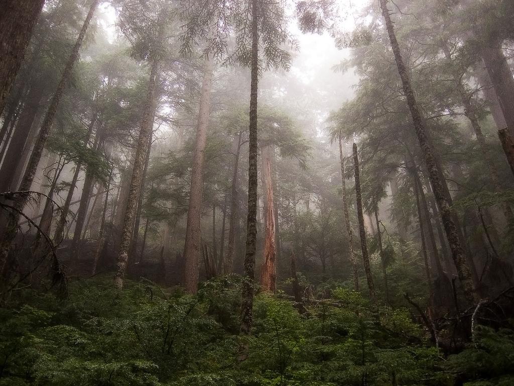 forest-blog