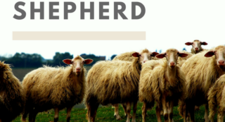 A Good Shepherd-2